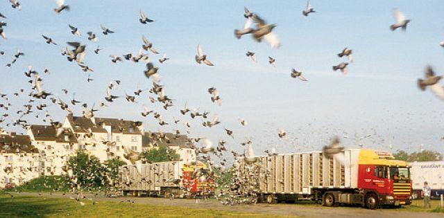 Auflass der Tauben am Zielort