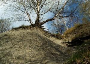Rest der Steinhalde; Foto: Meine Stadt