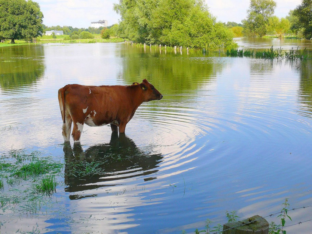 Lippe-Hochwasser 2007