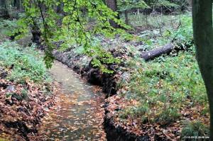 Barloer Busch: Land unter!