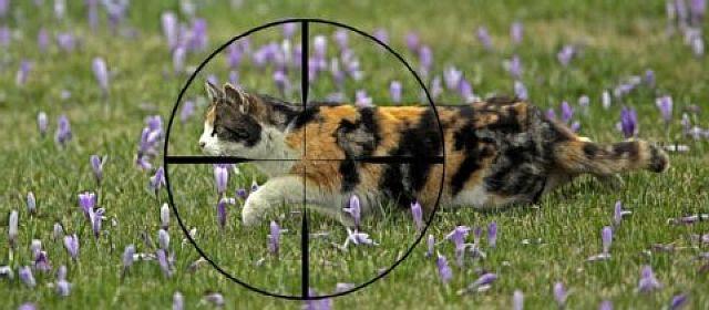 !-Katzen