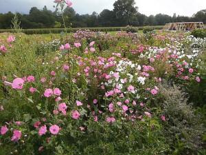 Eigens angelegte Blumenwiese