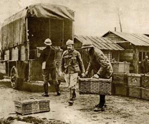 Brieftauben beim Militär im Ersten Weltkrieg