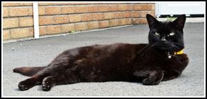 Manche bekreuzigen sich, wenn ihnen die schwarze Katze über den Weg läuft