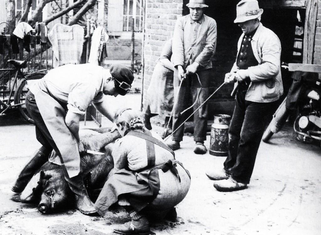 Hausschlachter Schlotbohm auf dem Hof Nagel 1954, Borkener Straße
