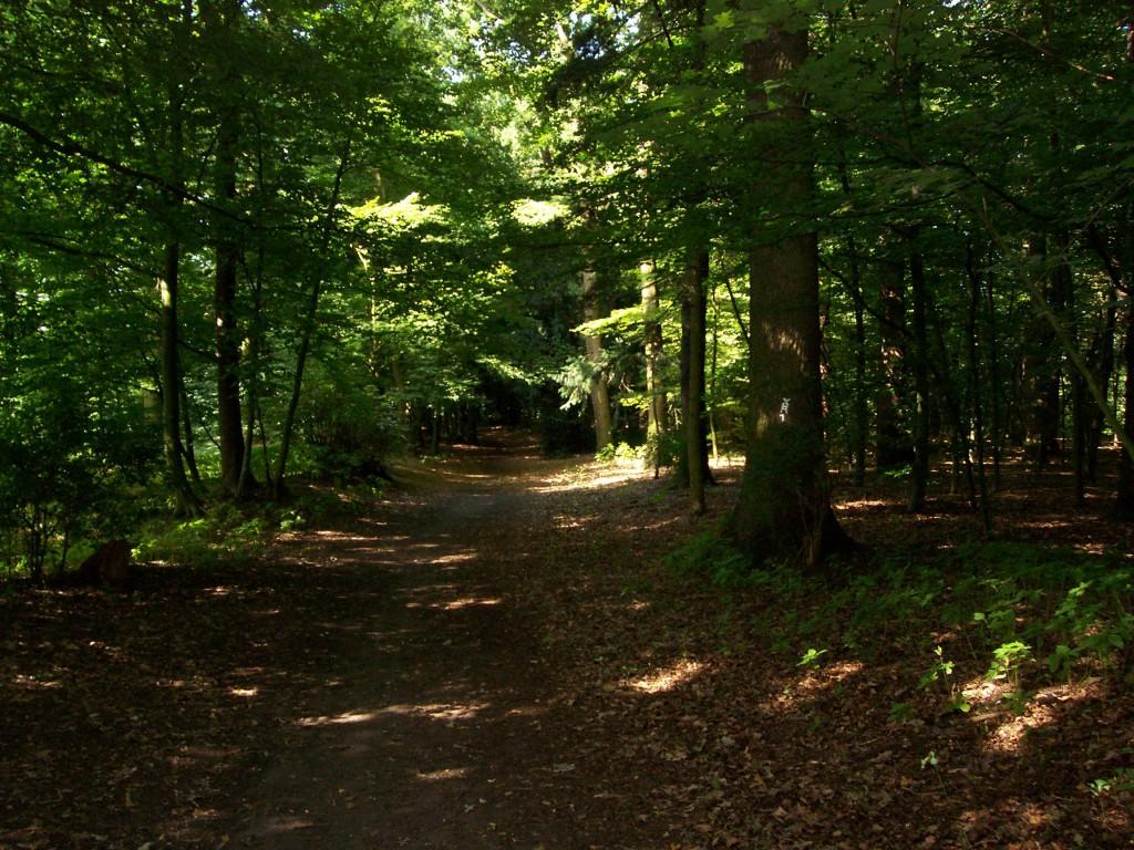 """Weg zum Friedhof im """"Judenbusch"""" 2012; Foto: Wolf Stegemann"""