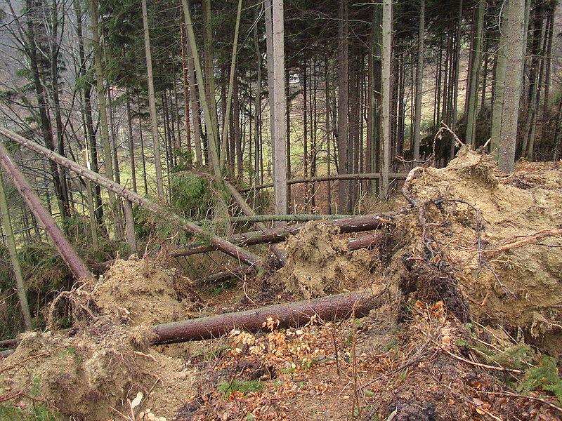 2007 umgeknickte Bäume überall