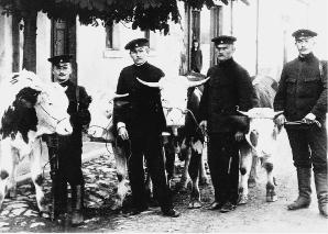 Von Grenzpolizisten beschlagnahmte Kühe