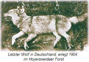 xxxx-wolf01